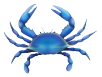 blue crab art